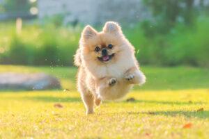 5 gadżetów, które pokocha Twój pies