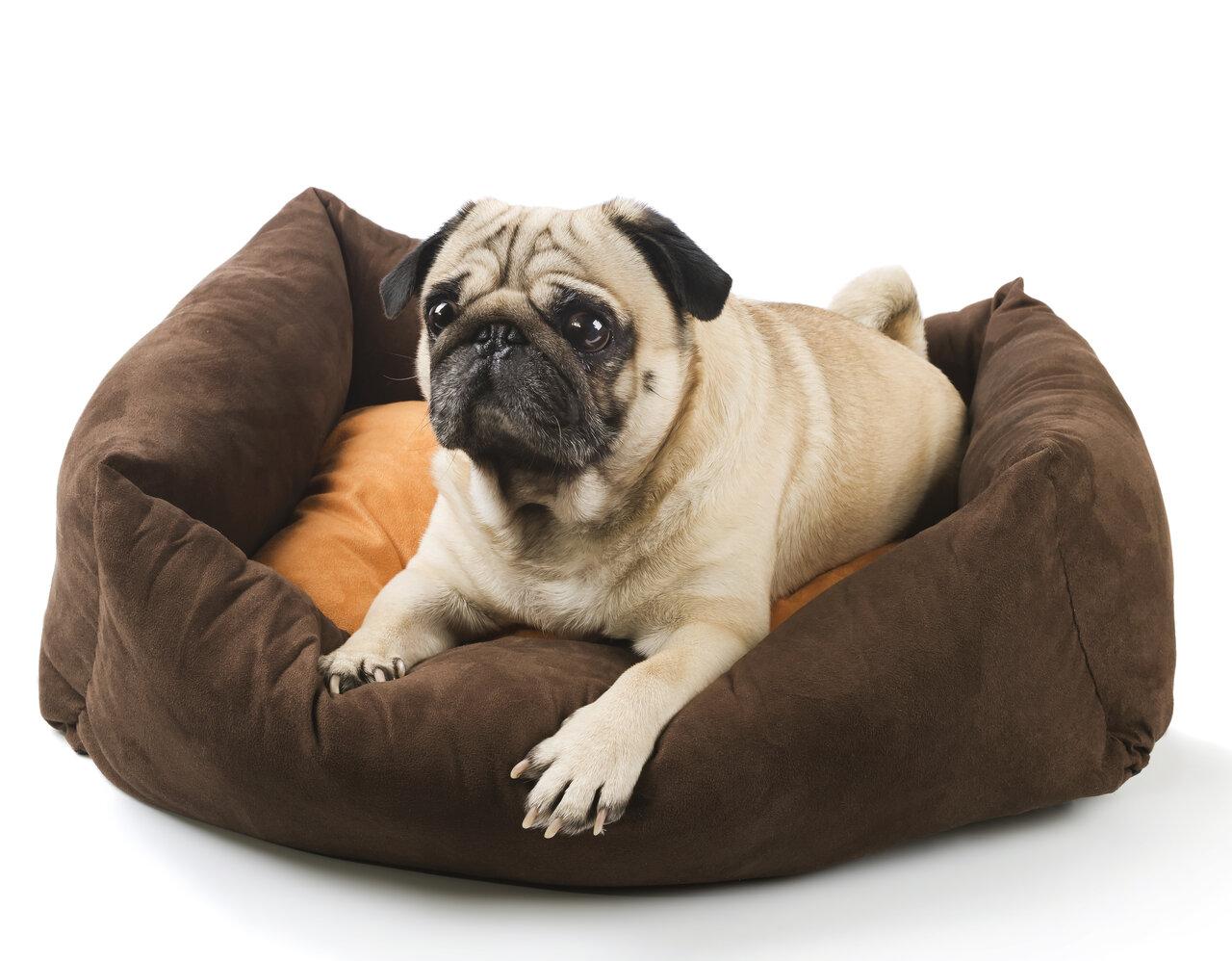 Miękkie legowisko dla psa